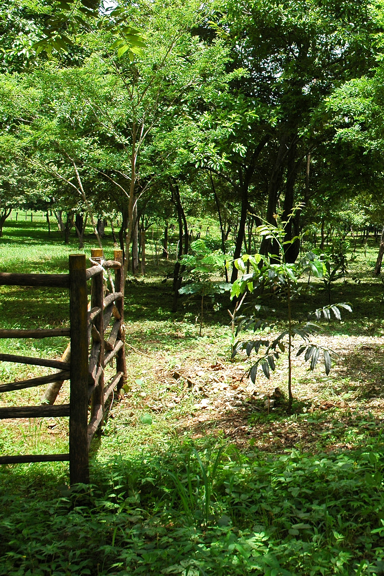 Horse Property For Sale in Costa Rica