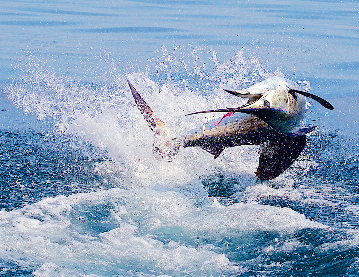Sport fishing in Costa Rica: where to go, what you'll find